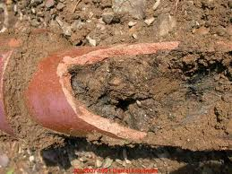 how to get tree roots out of sewer line